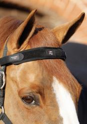 Premier Equine Magni-teque pannebånd