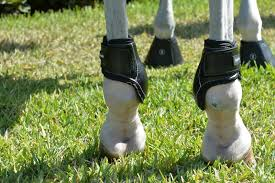 EquiFit Young Horse Boot